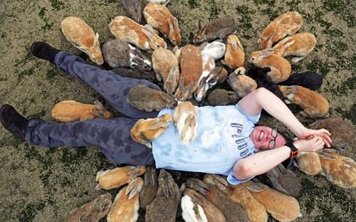 Cận cảnh ''vương quốc thỏ'' siêu dễ thương ngoài khơi Nhật Bản