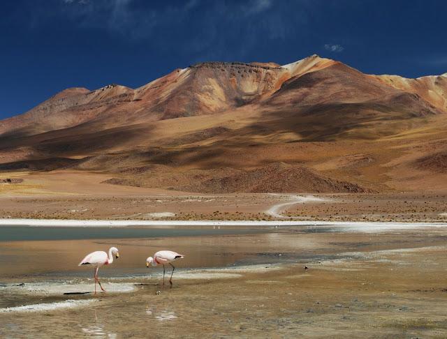 Laguna Hedionda, Lipez Bolivia