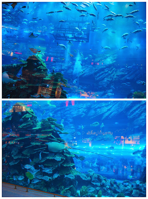 servicefromheart travelxp dubai mall uae emirates aquarium