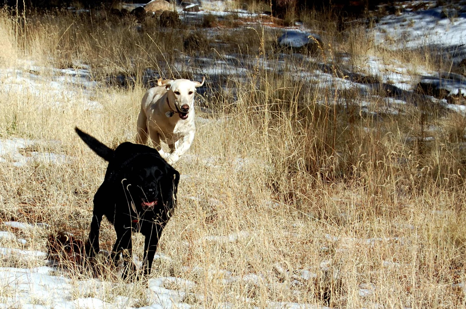 Mounds Pet Food Warehouse Kong Dog Bone Large