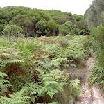 Ferns near Headland (30790)