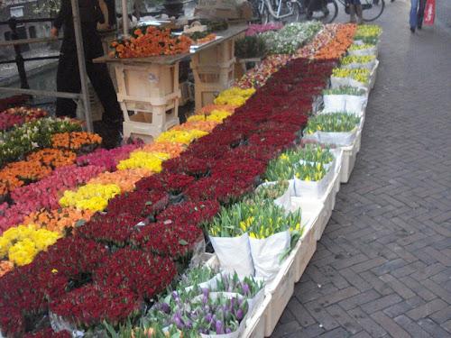 Utrecht, il Mercato dei Fiori