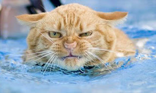 7 Maksud Tersembunyi di Balik Kebiasaan Kucing