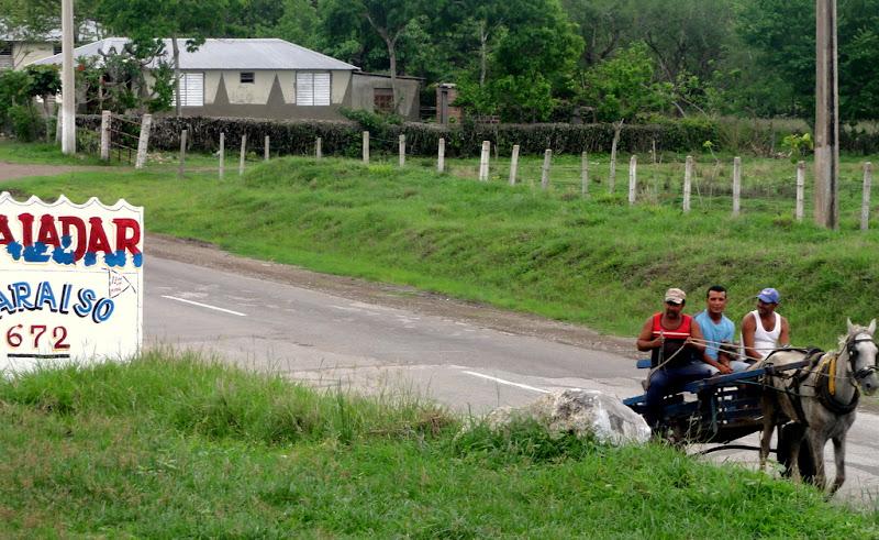 Horse carriage Cuba