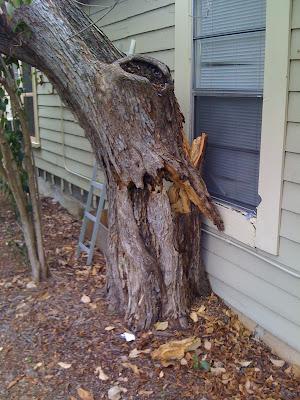 tree risk assessment - broken tree