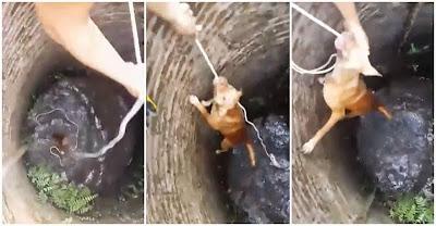 Salvamento de cão que tinha caído num poço antigo na Tailândia