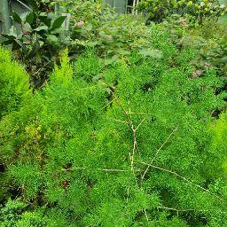Hoàng Tuấn