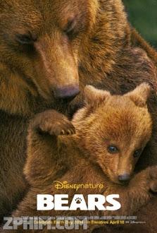 Những Chú Gấu - Bears (2014) Poster
