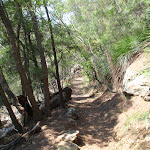 Warrimoo Track near Bobbin Head (119026)