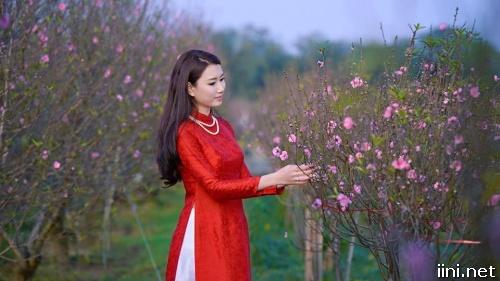 ảnh cô gái trong vườn đào ngày Tết