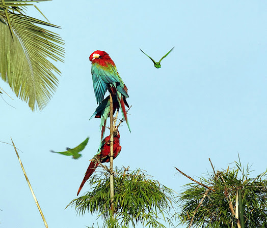 Macaws morning concentration surbound expeditions