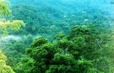 Rainforest Indonesia