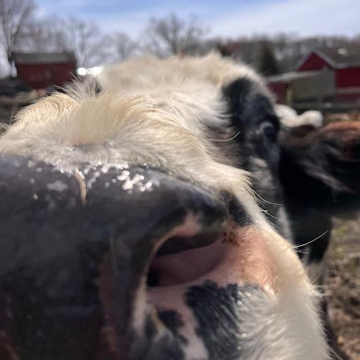 Erin Curtis