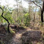 Walking in Rumbalara (203338)