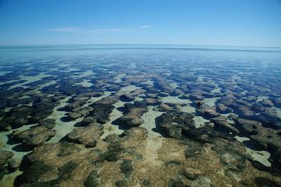 Shark bay - Stromatolites alive !!