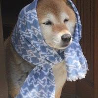 Foto de perfil de ケリ