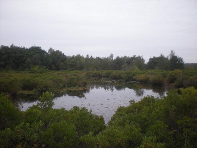 Marche Kennedy (80km) de Bergeijk (Nl): 16-17/09/2011 DSCN7187