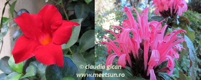 Roma. Flori rosii