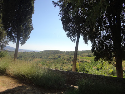 Montalcino vineyards, cypress trees and lavender from Villa Tolli