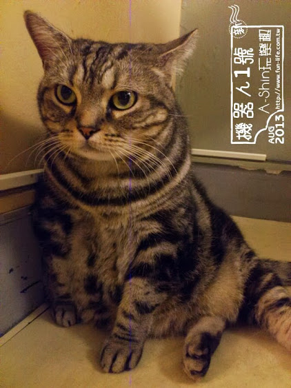 ROBOT STATION(鐵皮駅)貓