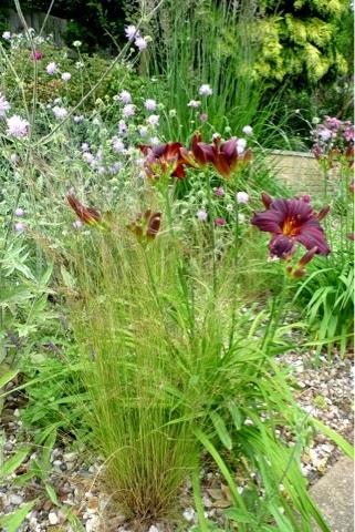 Photo-journal: Blackheath Open Gardens