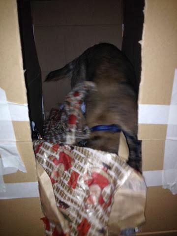 Hunde wühlen gerne im Papier, Charly macht es vor.
