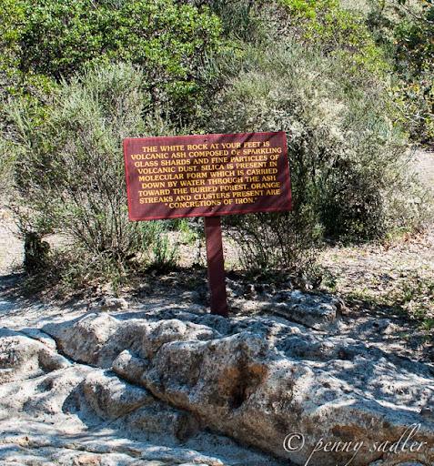 Calistoga's Petrified Forest
