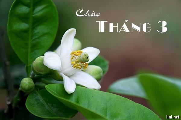 Chào Tháng 3 với những bài thơ hay, tình thơ sắc hoa tháng Ba màu nhớ