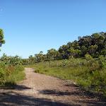 Open country near Van Dahls campsite track (378830)