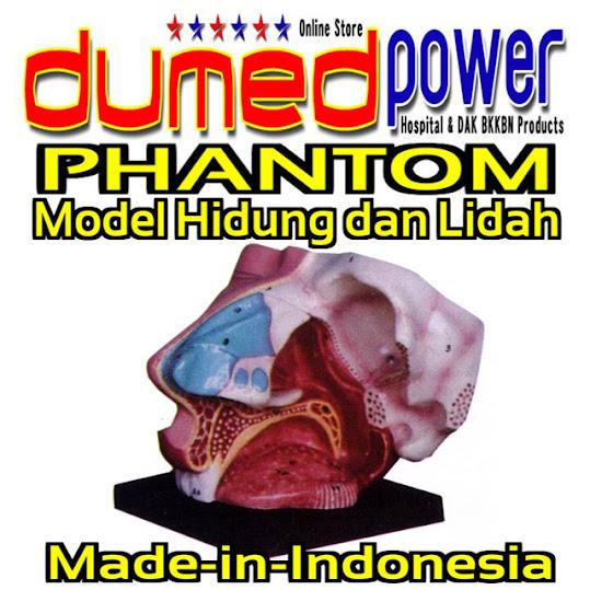 Alat-Peraga-Model-Hidung-Dan-Lidah-Silicone-DumedPower