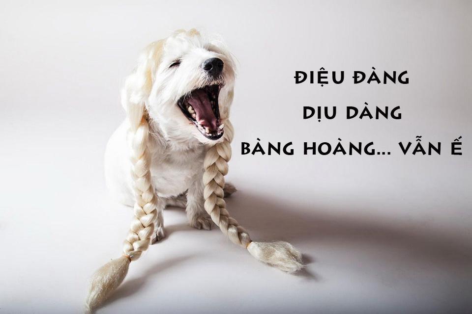 Ảnh chế nàng Chó điệu