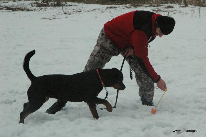 nauka gryzienia psa obornego
