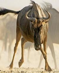 The Great Serengeti - Miền đất Serengeti vĩ đại