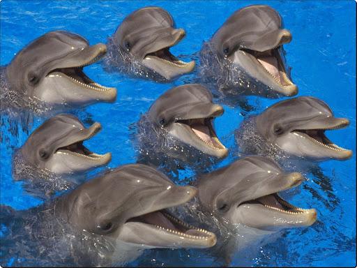 Bottlenose Dolphins.jpg
