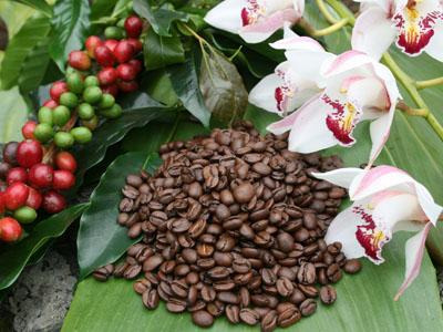 Dự trữ cà phê thế giới