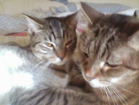 Catsparella: June 2013