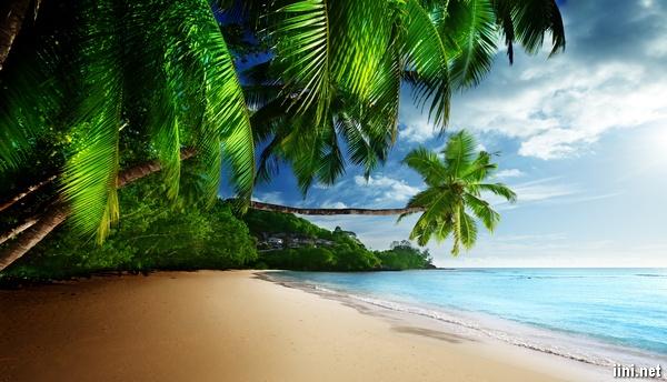 ảnh biển đẹp có cây dừa xanh mát