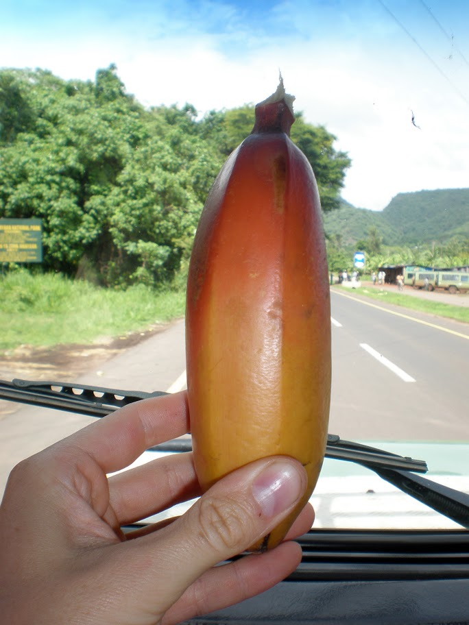 Red banana!! These tasted slightly sweeter than the boring yellow variety