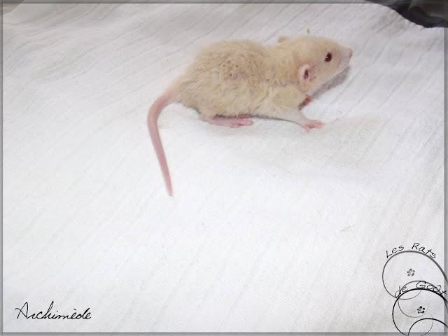 Ratons