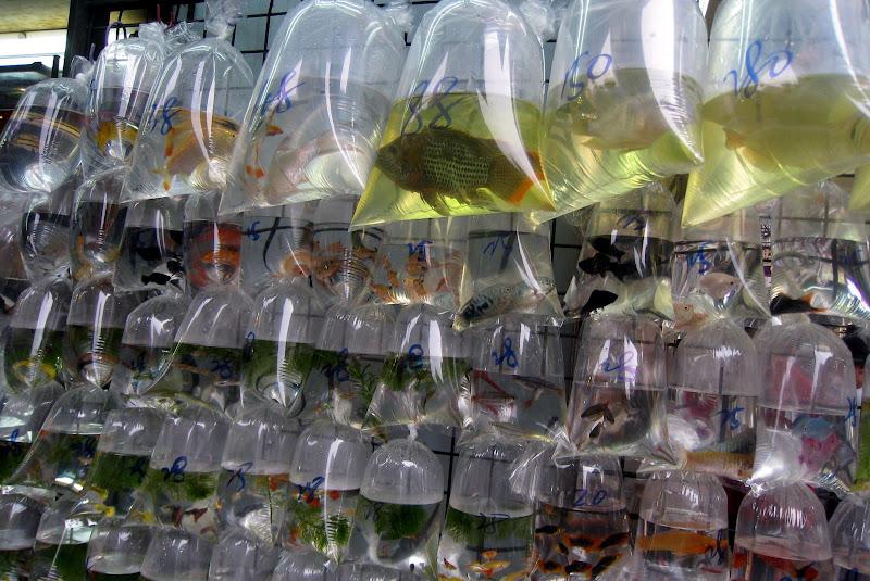 Гонконг рынки