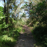 Heading through the bush (133171)