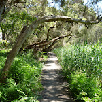Moist paperbark forest and boardwalk near Pains Road (344938)