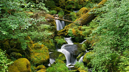 Watson Creek, Umpqua National Forest, Cascade Range, Oregon.jpg