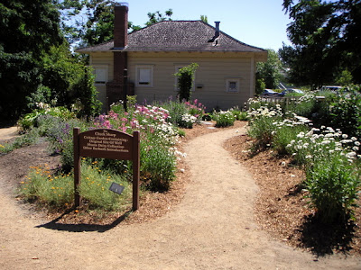 Cottage Shasta Daisy Garden June 2006.