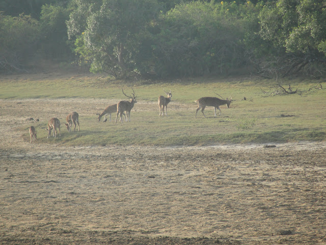Yala-National-Park-4