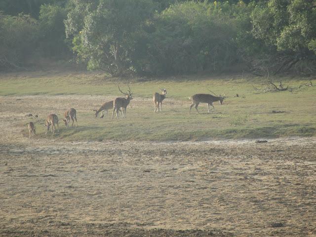 Yala-National-Park-4