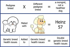 cavipoo, cockerpoo. Any cross of pedigree breeds is a mongrel. And can have genetic health issues from both parents