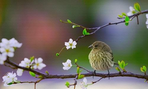 Thơ sắc Xuân hay