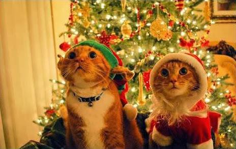 Sfondi di Natale gatti