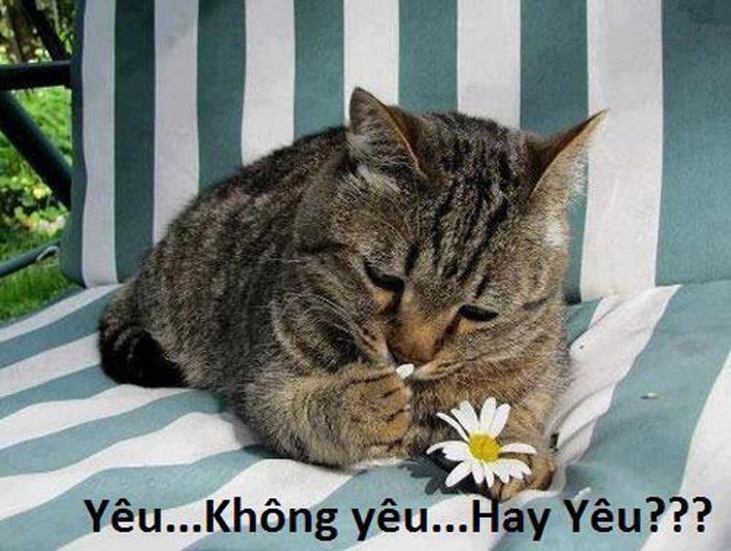 Ảnh chế vui Mèo ngắt bông hoa